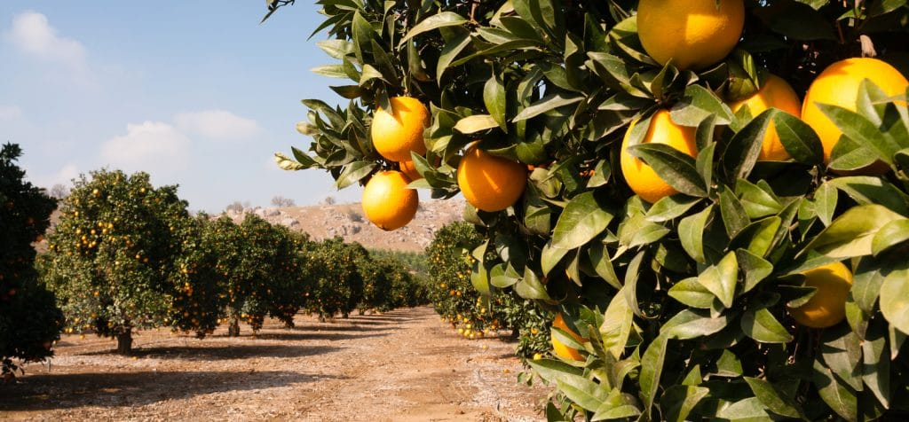 Pump Equipment and Service for Citrus Industry